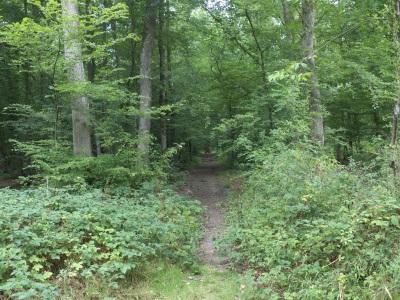 Bois de Dracy-le-Fort